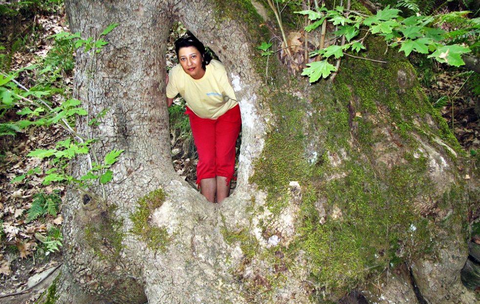 Copaci în satul Kastro