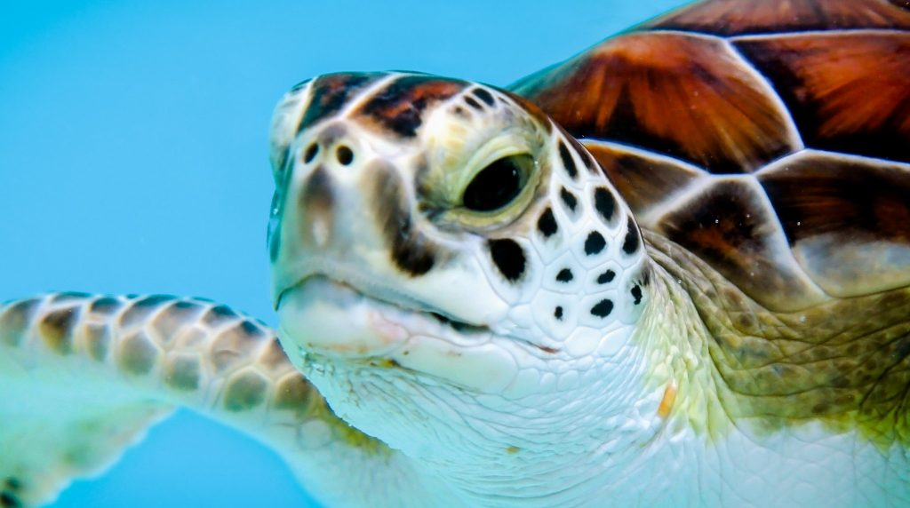 țestoasa careta-careta Insula Zakynthos
